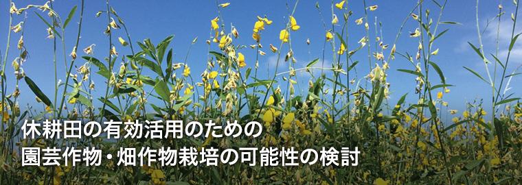 休耕田の有効活用のための園芸作物・畑作物栽培の可能性の検討