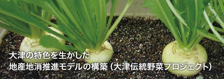 大津の特色を生かした地産地消推進モデルの構築(大津伝統野菜プロジェクト)