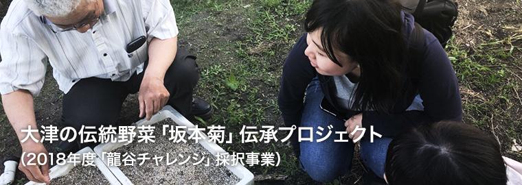 大津の伝統野菜「坂本菊」伝承プロジェクト(2018年度「龍谷チャレンジ」採択事業)